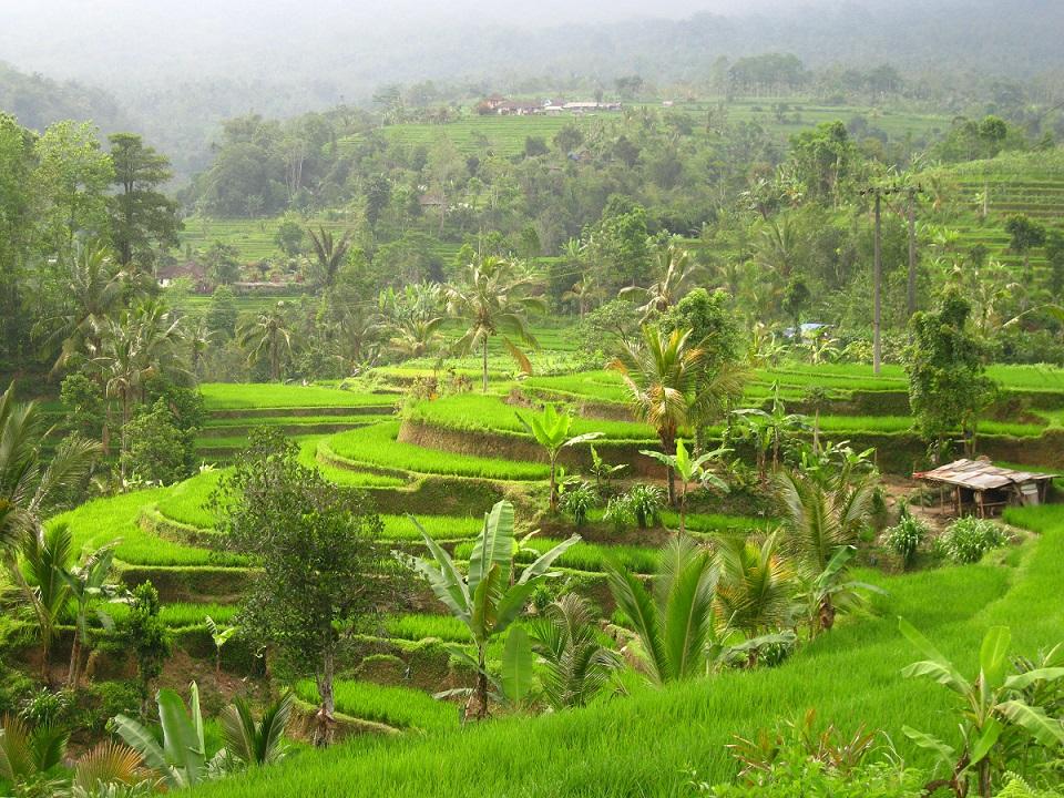 Langzeitreise-Momente: Balis Reisfelder