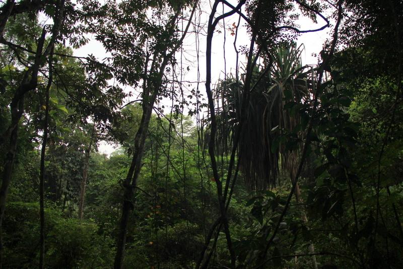 Bukit Lawang Sumatra Orang Utans 16