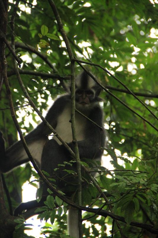 Bukit Lawang Sumatra Orang Utans 10